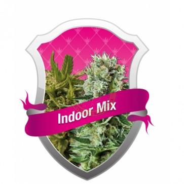 Indoor Mix