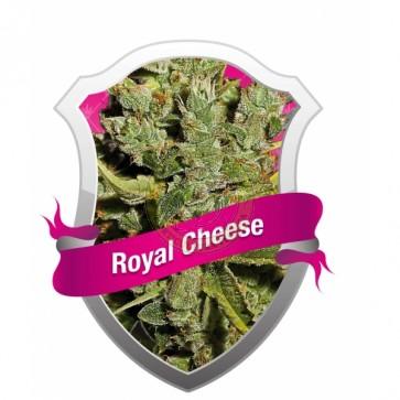 Royal Cheese