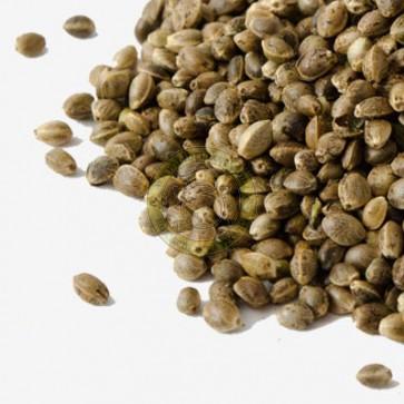 mamba negra autofloreciente a granel
