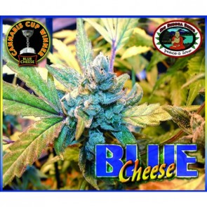 Blue Cheese Feminizada