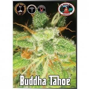 Buddha Tahoe Feminizada