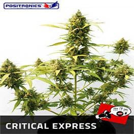 Critical Express Auto