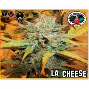 LA Cheese Feminizada