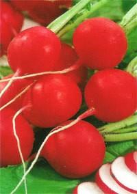 Rabano Redondo Rojo