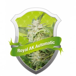 Royal AK Automatic