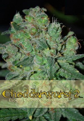 Cheddarwurst 2 5 Unidades Regulares