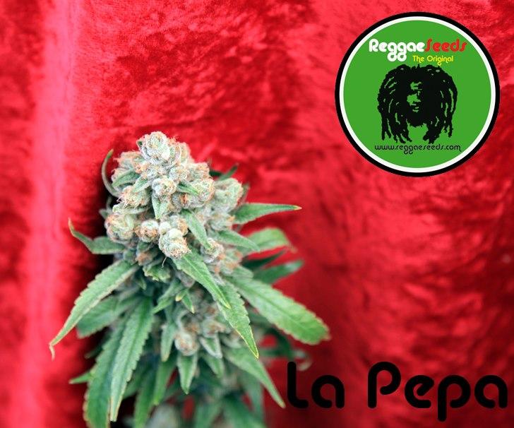 La pepa Cannabis Cup