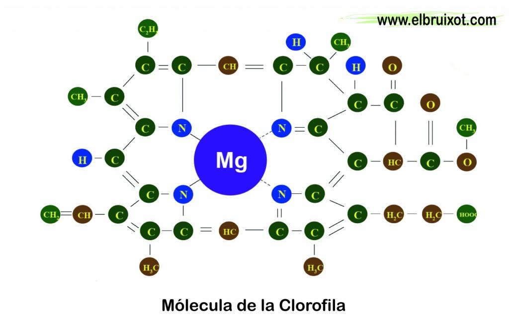 clorofila-01