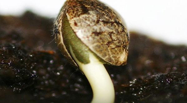 Germina tus semillas - El Bruixot