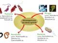 Función de los microorganismos en la nutrición de las plantas